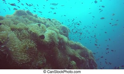 Marine scuba diving, Underwater colorful tropical coral reef garden seascape. School of sea fishes, deep ocean. Sea anemones field, soft corals aquatic symbiosis ecosystem, paradise lagoon background