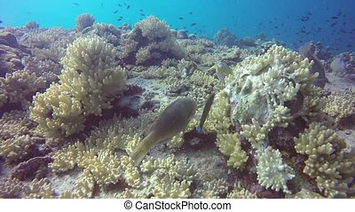 Marine scuba diving, Underwater colorful tropical coral reef seascape. School of sea fishes deep in the ocean. Soft and hard corals aquatic ecosystem paradise background. Water extreme sport as hobby