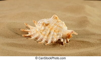 Marine seashell on sand, rotation, close up