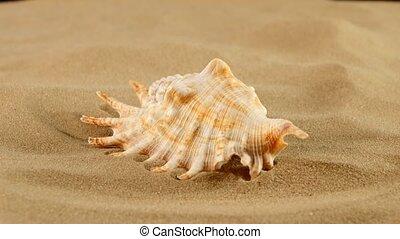 Marine seashell on sand, rotation, close up