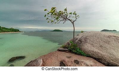 marine, timelapse, arbre, 4k, rocks., croissant, vue