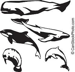 marinier, mammals