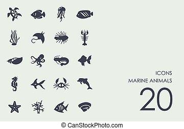 marino, set, animali, icone