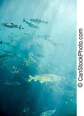 marint liv, -, fish