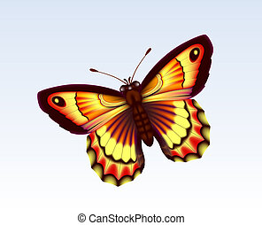 mariposa, 6