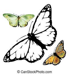 mariposa, abierto, conjunto, monarca, alas