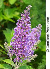 mariposa, arbusto, 04