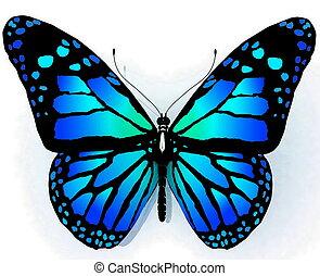 mariposa, azul, color aislado