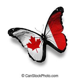 mariposa, bandera, blanco, aislado, canadiense