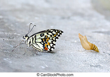 mariposa, bebé, piso