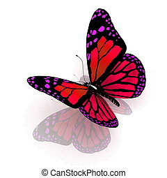 mariposa, blanco, aislado