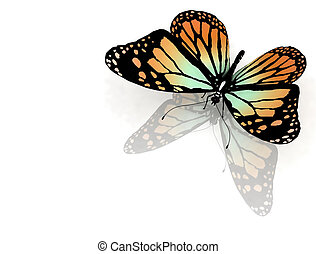 mariposa, blanco
