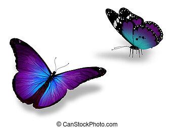 mariposa, blanco, violeta, dos, aislado