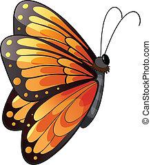 mariposa, colorido