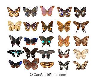 mariposa, conjunto, colección