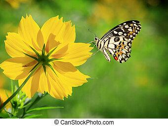 mariposa, en, el, flor amarilla