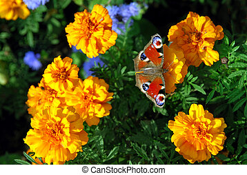 mariposa, en, flores amarillas
