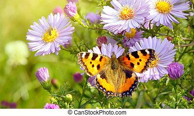 mariposa, en, flores