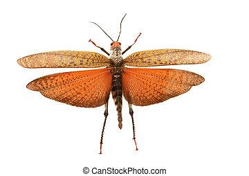 mariposa, encantador
