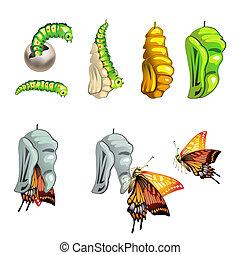 mariposa, etapas