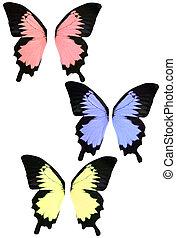 mariposa, fantasía, aislado, alas
