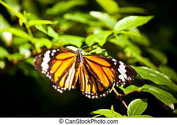 mariposa, flor