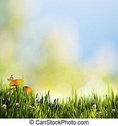 mariposa, fondos, hongos, belleza natural