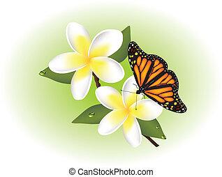 mariposa, frangipani, vector