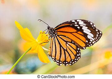 mariposa, monarca, flor