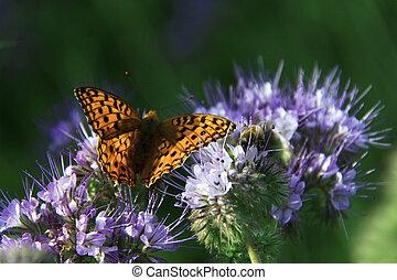 mariposa, -, monarca
