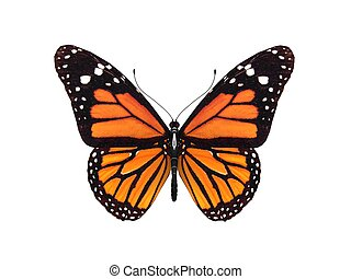 mariposa, monarca, render, digital