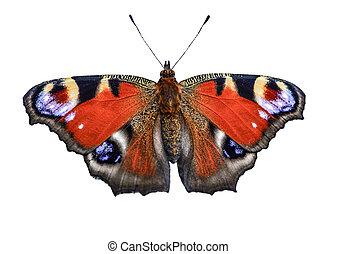 mariposa, pavo real, (inachis, io), aislado, plano de fondo...