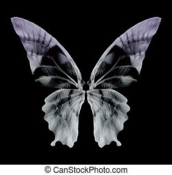 mariposa, vector, aislado, radiografía, black.