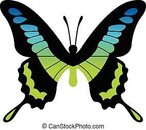 mariposa, vector, ilustración