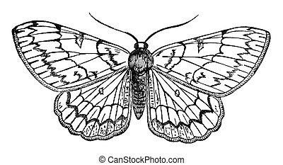 mariposa, vendimia, ilustración