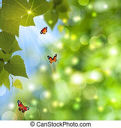 mariposa, verano, sol, resumen, fondos, rayo