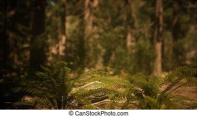 mariposa, vroeg, bosje, morgen, zonlicht, sequoias