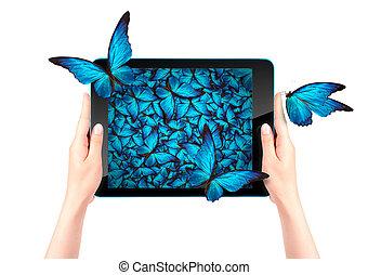 mariposa, vuelo, computadora, tableta, afuera