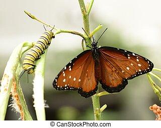 mariposa, y, oruga, en, planta