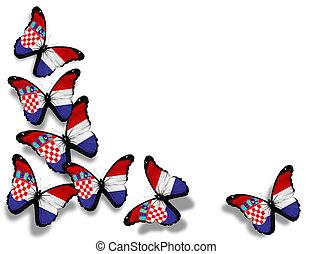 mariposas, aislado, bandera, plano de fondo, blanco, croata