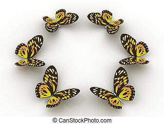 mariposas, aislado, blanco