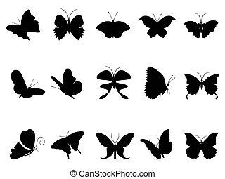 mariposas, colección, silueta