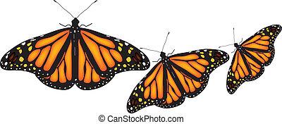 mariposas, colorido, fondo blanco