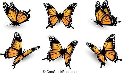 mariposas, seis, set., vector.