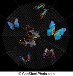 mariposas, spiderweb