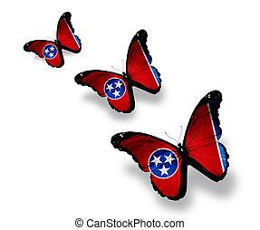 mariposas, tres, aislado, bandera, tennessee, blanco