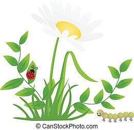 mariquita, ciempiés, flor