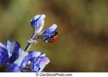 mariquita, en, flor