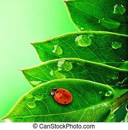 mariquita, en, un, fresco, hojas verdes