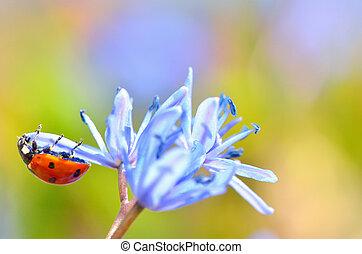 mariquita, flor